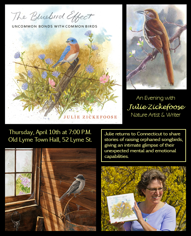 "Julie Zickefoose, naturalist, writer, artist, author of ""The Bluebird Effect"" Flyer & Illustrations by ©Julie Zickefoose. All Rights Reserved."